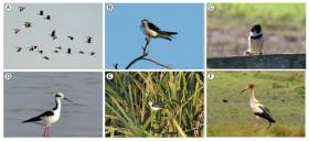The Bird Community in a Threatened Coastal Lagoon in Southeastern Brazil